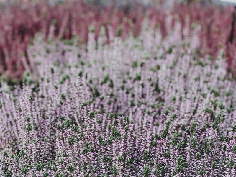 Decaflor tuincentrum jardinerie Rekkem